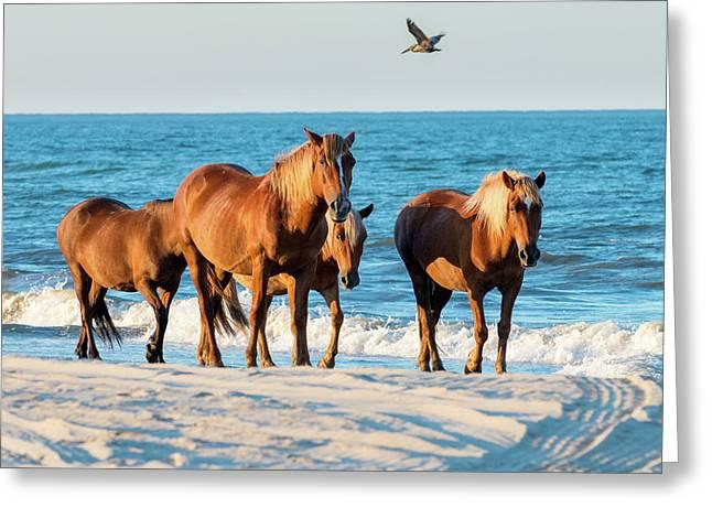 Wild Colonial Spanish Mustangs Of Carova Greeting Card