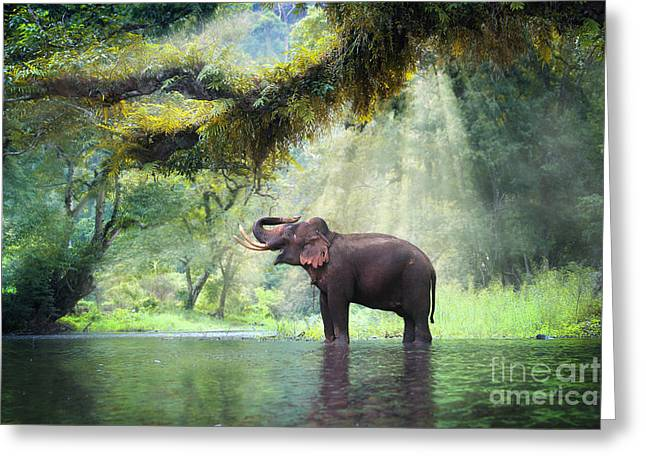 Wild Elephant In The Beautiful Forest Greeting Card