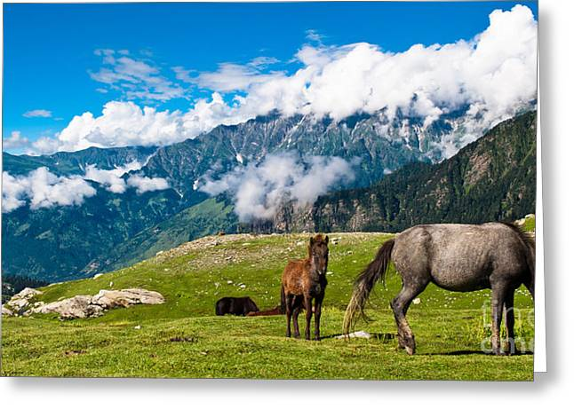Wild Horses Pasturing On Mountain Greeting Card