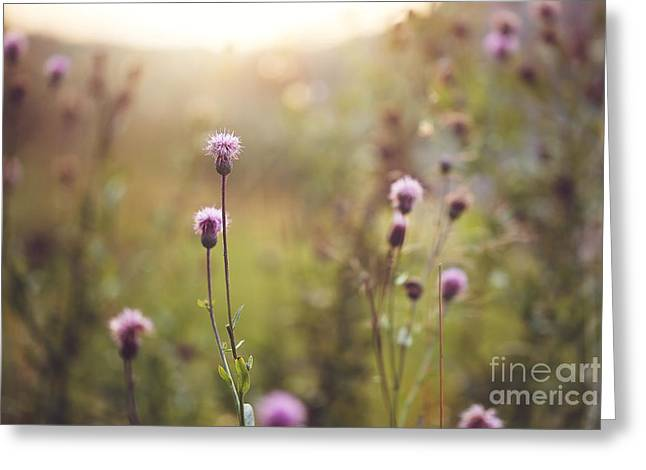 Wild Meadow Pink Flowers In Autumn Greeting Card