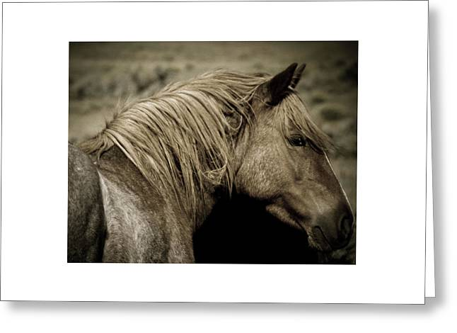 Wild Mustangs Of New Mexico 13  Greeting Card