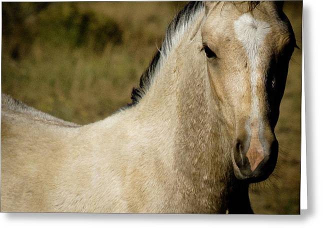 Wild Mustangs Of New Mexico 5 Greeting Card