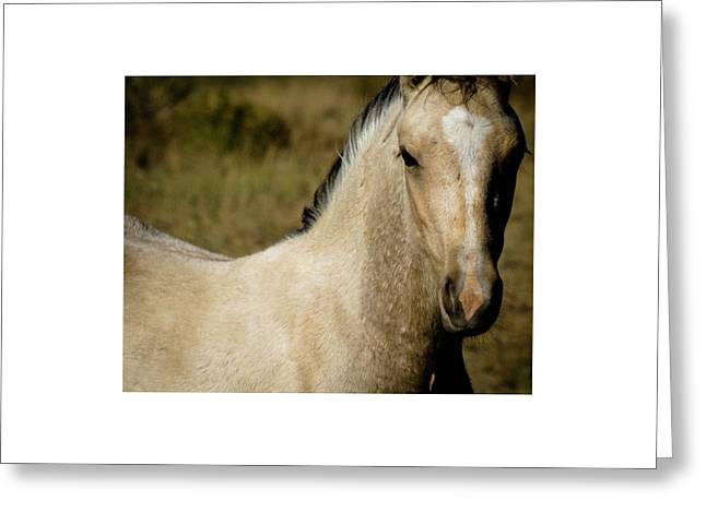 Greeting Card featuring the photograph Wild Mustangs Of New Mexico 5 by Catherine Sobredo