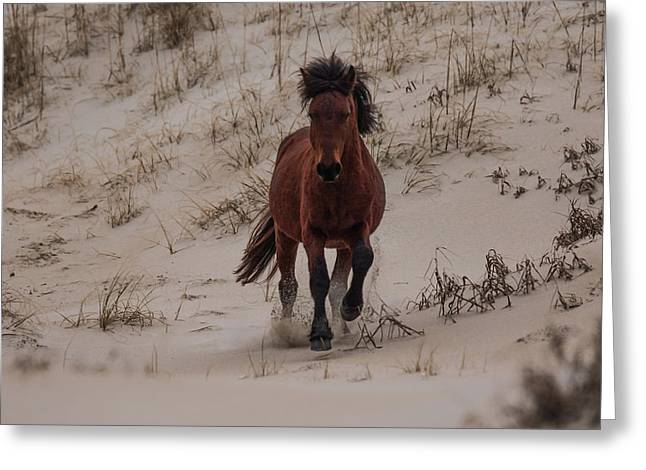 Wild Pony Greeting Card