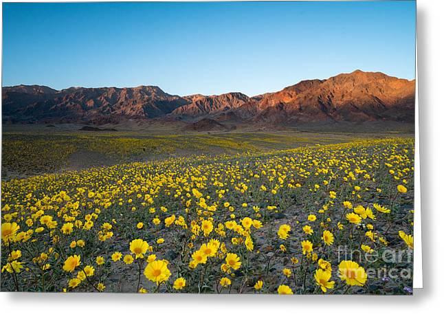 Wildflower Super Bloom In Spring, Death Greeting Card