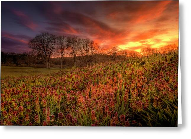 Wildflowers And Wildfire Sky Greeting Card