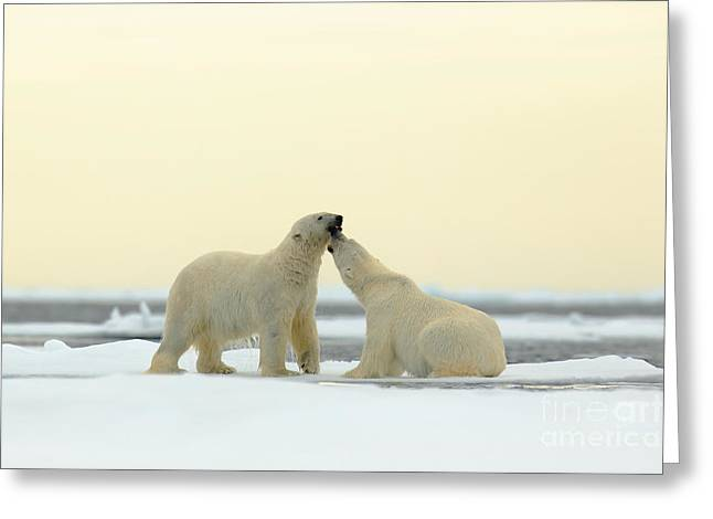 Wildlife Scene From The Arctic. Couple Greeting Card