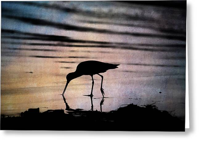 Greeting Card featuring the photograph Willet At Sunset by John Rodrigues