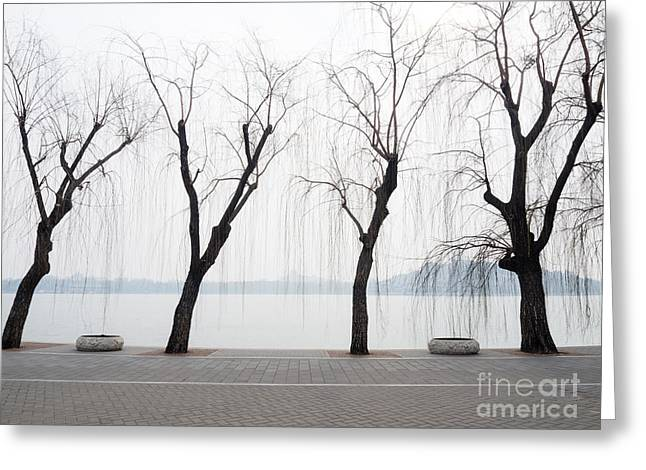 Willow Trees On The Lakeside In Beihai Greeting Card