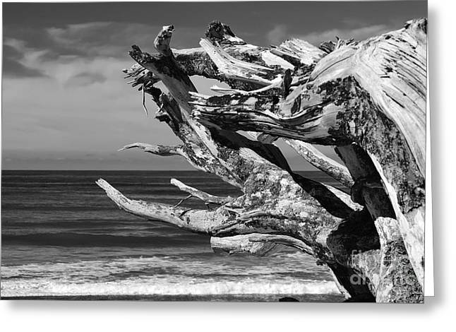 Greeting Card featuring the photograph Wind Drift by Jeni Gray