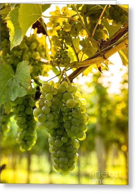 Wine Season Greeting Card