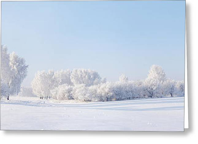 Winter Beautiful Landscape With Trees Greeting Card by Alex po