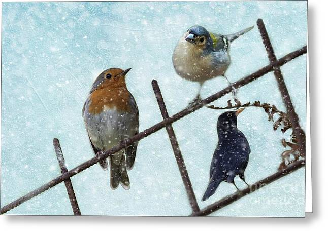 Winter Birds Greeting Card