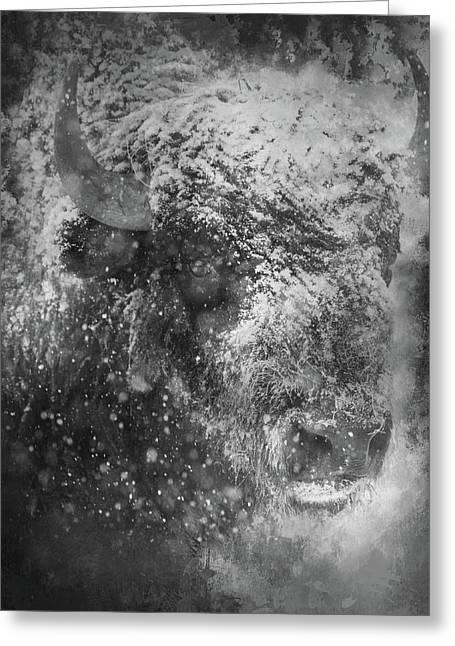 Winter Bison Greeting Card
