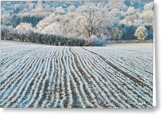 Winter Field, Little Rissington, Gloucestershire Greeting Card by David Ross