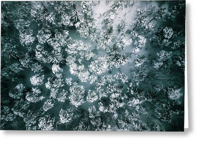 Winter Forest - Aerial Photography Greeting Card