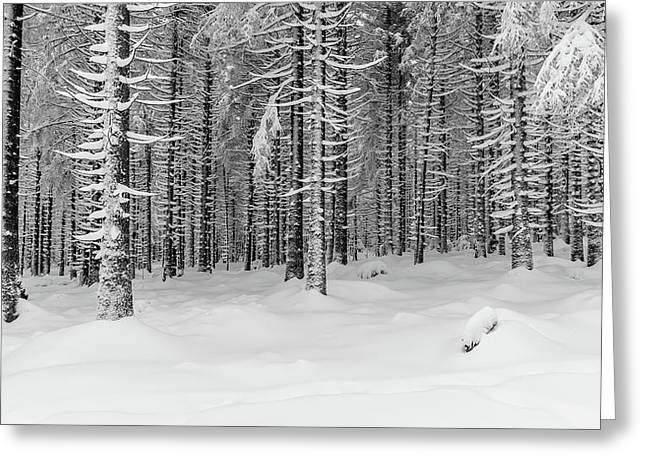 winter forest, Harz Greeting Card