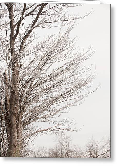 Winter Hoarfrost Greeting Card