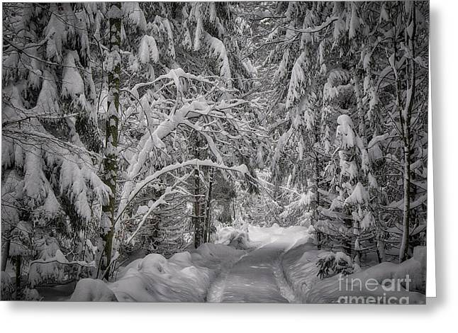 Greeting Card featuring the photograph Winter In The Forest by Edmund Nagele