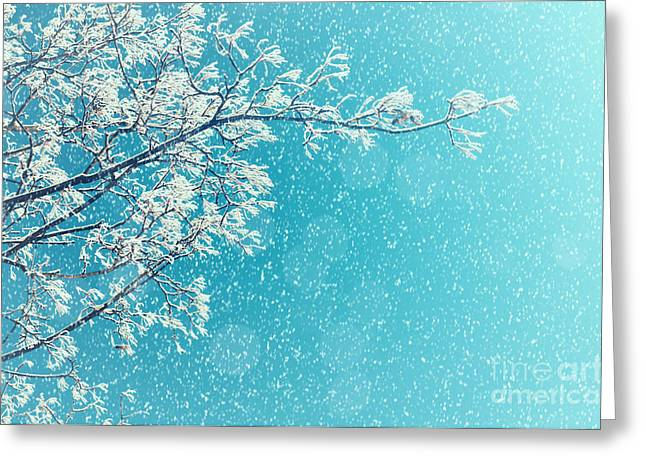 Winter Landscape Of Snowy Tree Branches Greeting Card