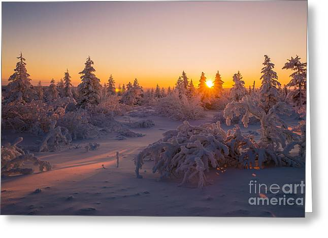 Winter Landscape With Forest Trees Greeting Card