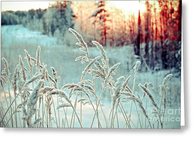 Winter Landscape.winter Scene Greeting Card