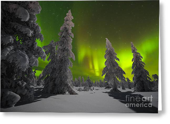 Winter Night Landscape With Forest And Greeting Card