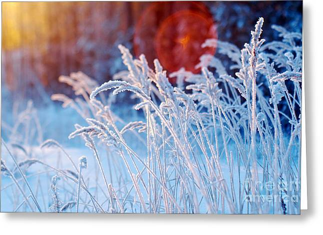 Winter Scene .frozenned Flower .pine Greeting Card