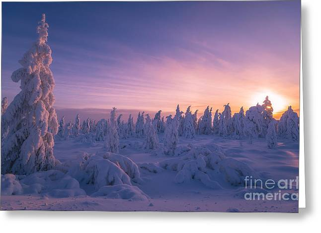 Winter Snowscape With Forest, Trees And Greeting Card