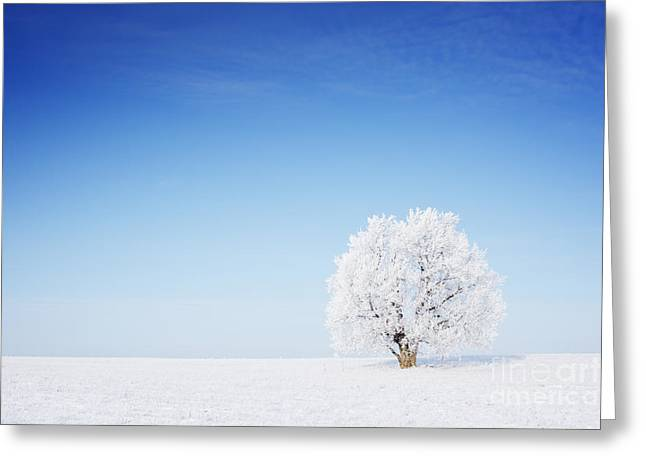Winter Tree In A Field With Blue Sky Greeting Card