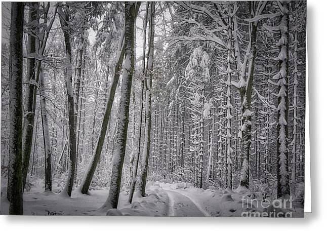 Greeting Card featuring the photograph Wintry Forest Track by Edmund Nagele