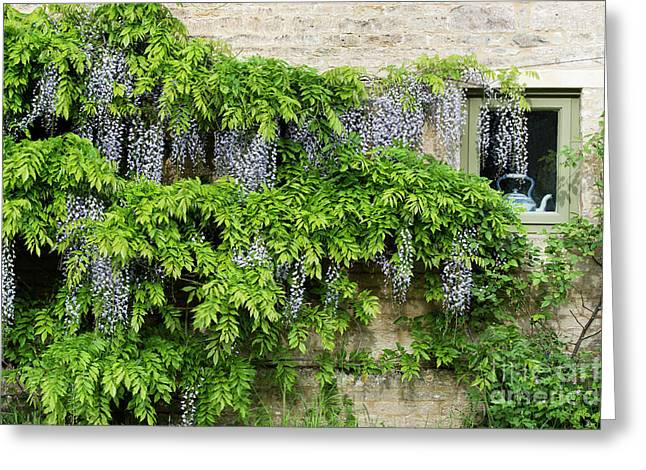 Wisteria On A Cotswold Stone House Greeting Card by Tim Gainey