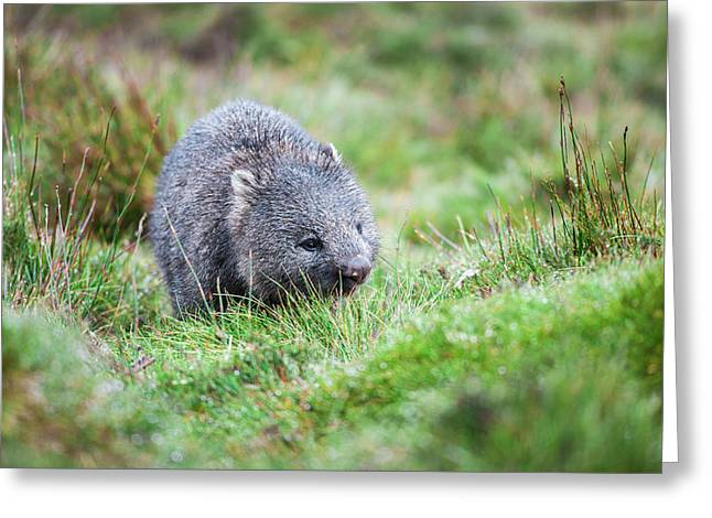 Greeting Card featuring the photograph Wombat Outside During The Day. by Rob D Imagery