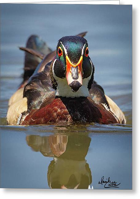 Wood Duck Face First Greeting Card