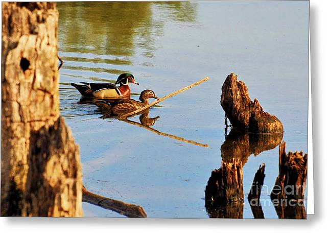 Greeting Card featuring the photograph Wood Ducks by Debbie Stahre