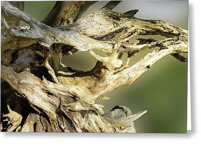 Greeting Card featuring the photograph Wood Log In Nature No.14 by Juan Contreras