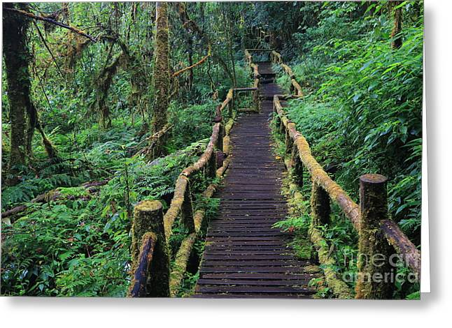 Wooden Bridge In Tropical Rain Forest Greeting Card