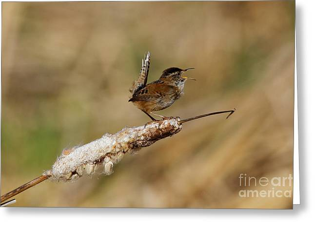Wren Strong Song Greeting Card