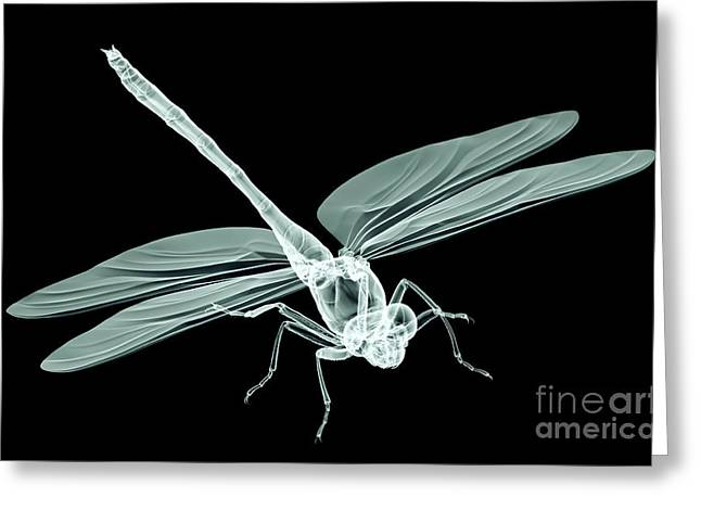 Xray Image Of An Insect Isolated On Greeting Card