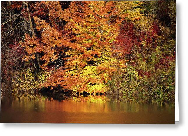 Greeting Card featuring the photograph Yellow Autumn Leaves by Mike Murdock