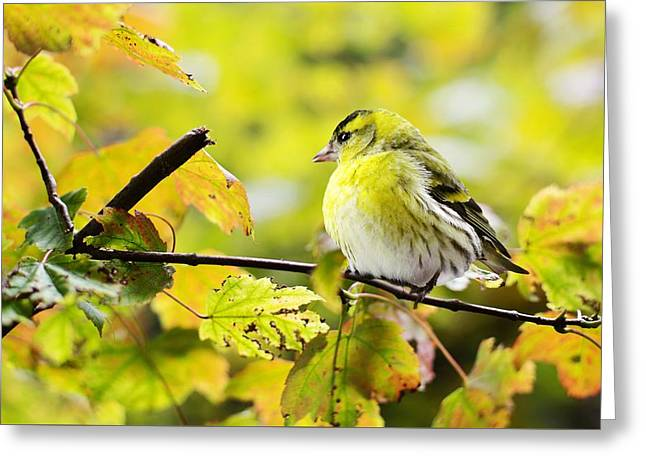 Greeting Card featuring the photograph Yellow Bird by Top Wallpapers