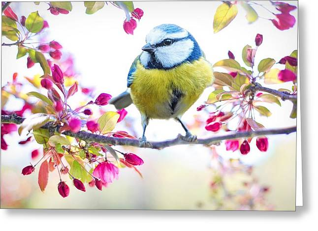 Yellow Blue Bird With Flowers Greeting Card