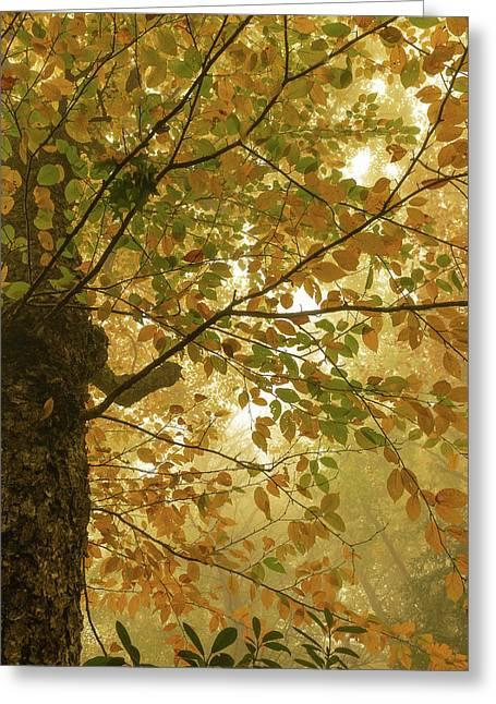Yellow Fall Leaves - Blue Ridge Parkway Greeting Card