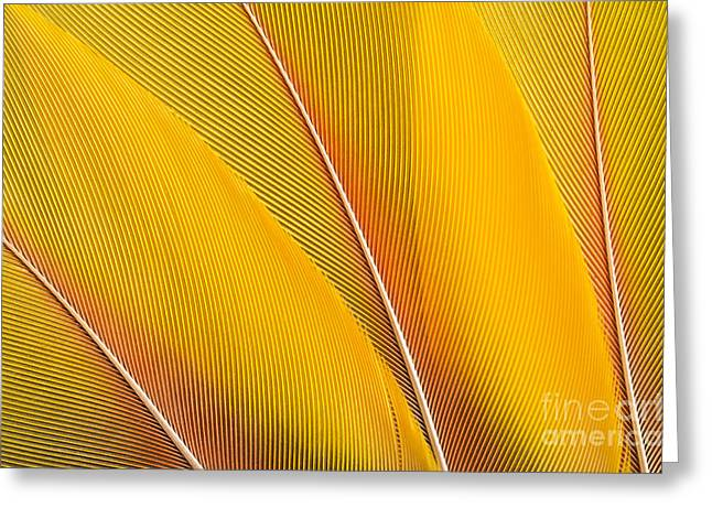 Yellow Feathers Background Composition Greeting Card