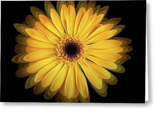 Greeting Card featuring the photograph Yellow Gerbera Daisy Repetitions by Bill Swartwout Fine Art Photography