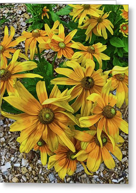 Yellow In Bloom Greeting Card