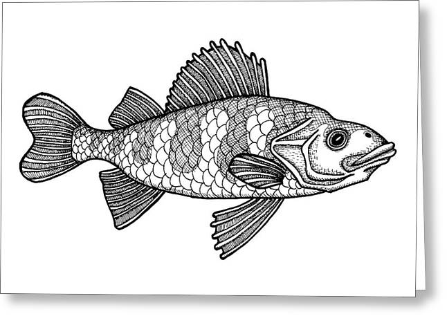 Yellow Perch Greeting Card