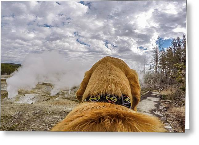 Greeting Card featuring the photograph Yellowstone By Photo Dog Jackson by Matthew Irvin
