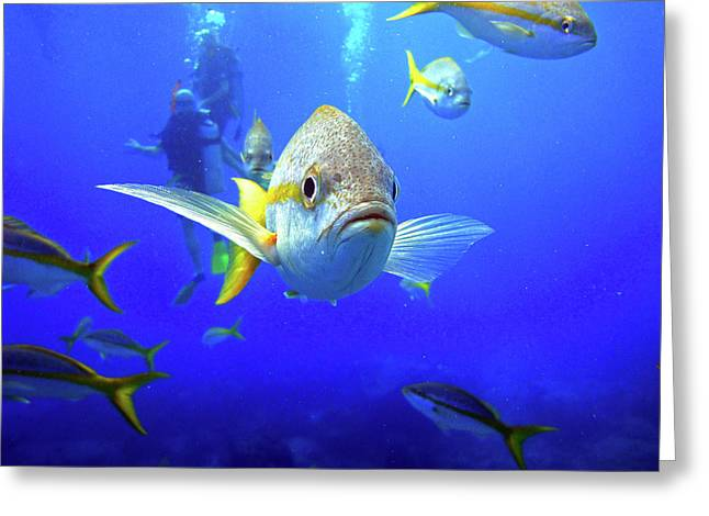 Yellowtails Greeting Card