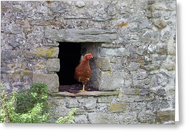 Yorkshire Hen Greeting Card